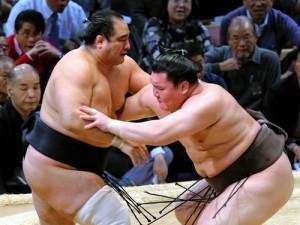 Hakuhô gagne face à Aminishik