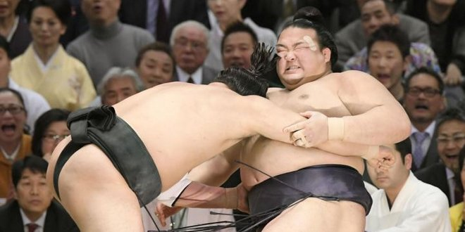 J13 – Harumafuji pousse Kisenosato vers sa 1ère défaite
