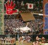 Comprendre le sumo à la télé