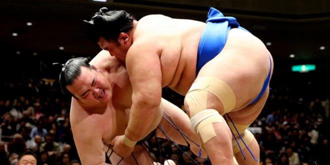 J4  – Hakuho et Kisenosato chutent de nouveau