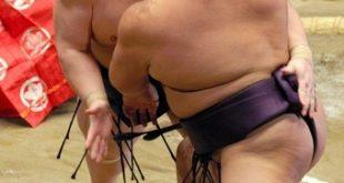 lutteurs de sumo