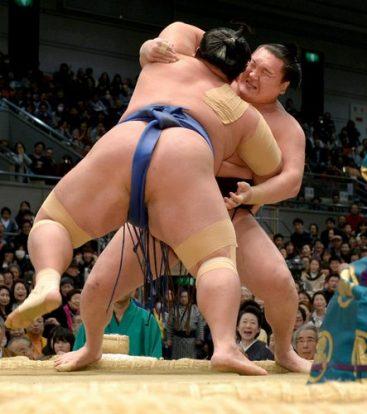 Hakuhô perd, égalité avec Kakuryû