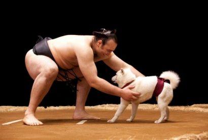 Kotooshu avec le chien dans la publicité pour Softbank