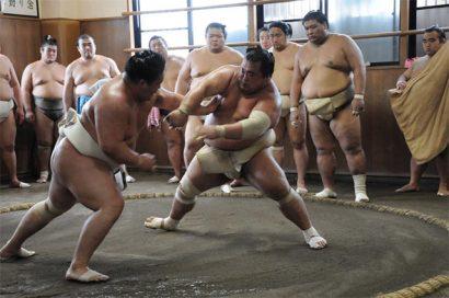 Assister à un entrainement de sumo