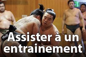 entrainement de sumo